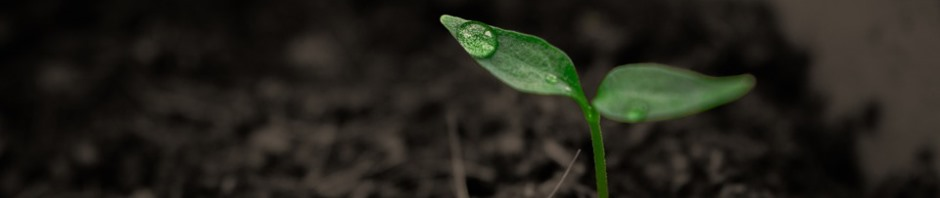 ekotoxikologie Mikrochem